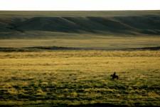 Randonnée à Cheval dans le Khentii (à l'Est de la Mongolie) (13 jours/12 nuits)