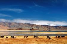 Trek dans le désert de Gobi et à Khangai (17 jours/14 nuits)