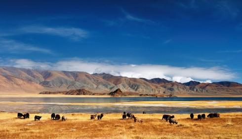 Trek mongolie agence de voyages lyon for Agence paysage lyon